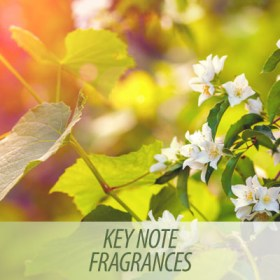 Key note fragrances